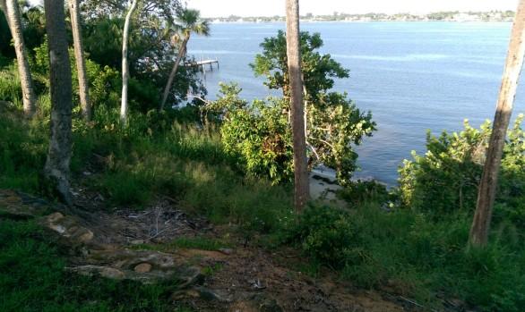 Exotic Vegetation Removal - Site Development