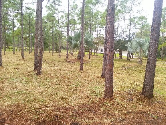 Bush Hogging & Grinding - Site Development (After)