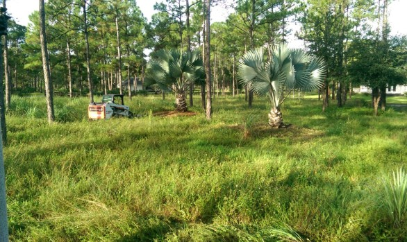 Bush Hogging & Grinding – Site Development (Before)